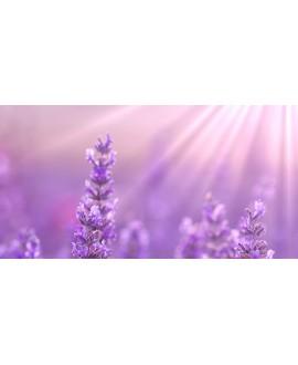 Lavendel Detox Behandeling